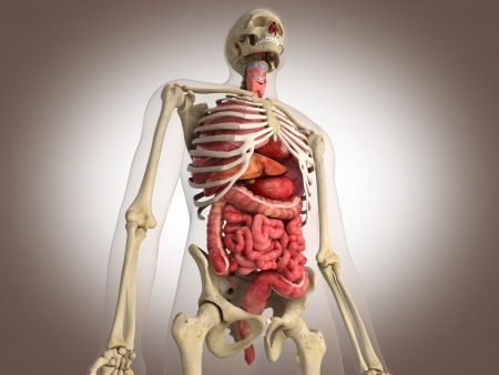 19434603 - 3d rendering intestinal internal organ